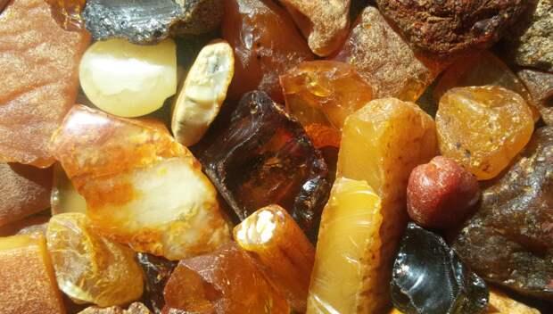 В балтийском янтаре нашли ранее неизвестные ученым антибиотики