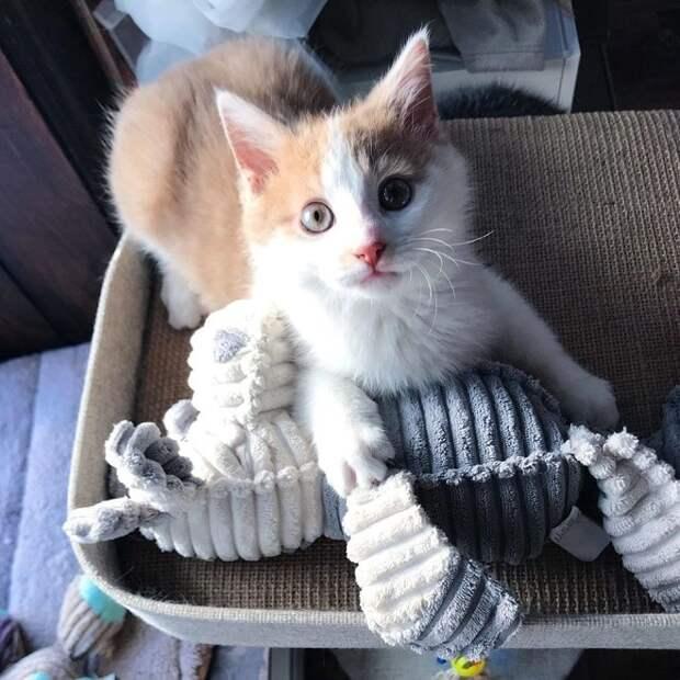 Несколько котят появились во дворе дома, где жила женщина. Они исчезли, и спустя время пришло только два малыша