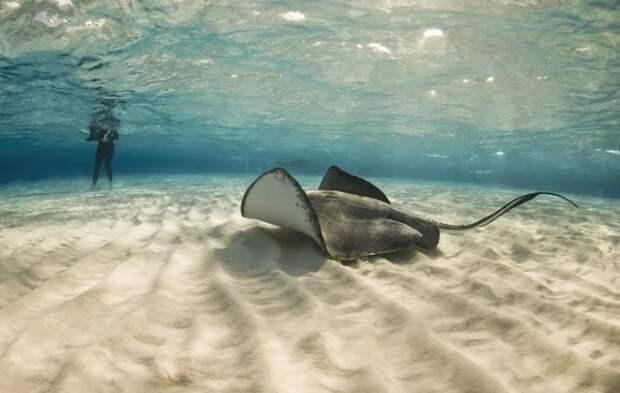 Древние позвоночные ходили под водой за миллионы лет до выхода на сушу