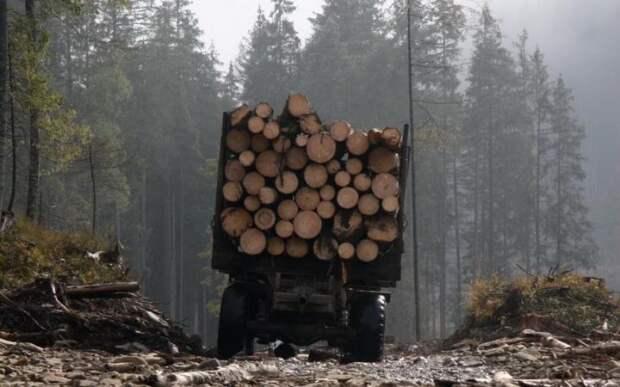 На Украине узнали, за какую сумму Зеленский согласился отменить мораторий на вывоз леса в ЕС