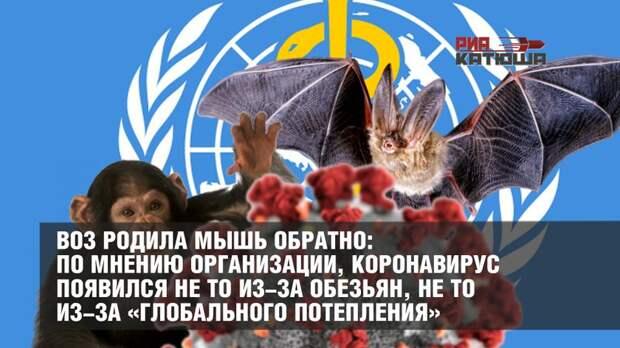ВОЗ родила мышь обратно: по мнению организации, коронавирус появился не то из-за обезьян, не то из-за «глобального потепления»