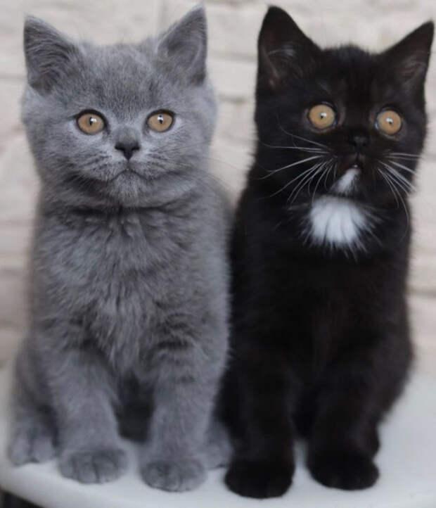 Кот с двухцветной мордашкой стал отцом двух котят