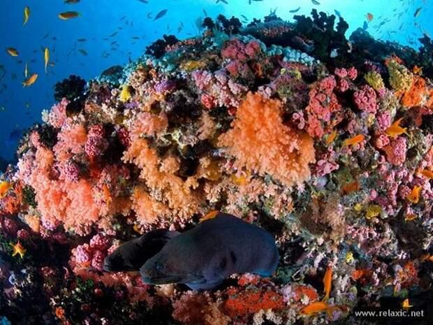underwater_046