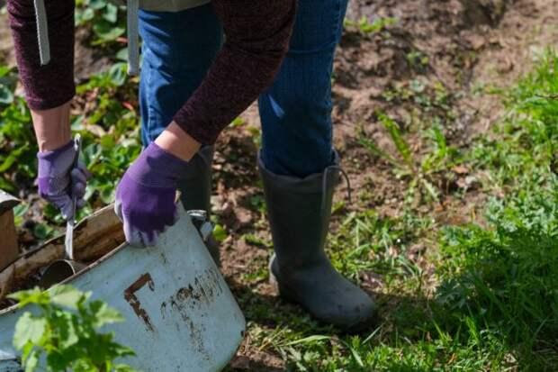 Огородные мифы. 10 самых распространенных заблуждений дачников