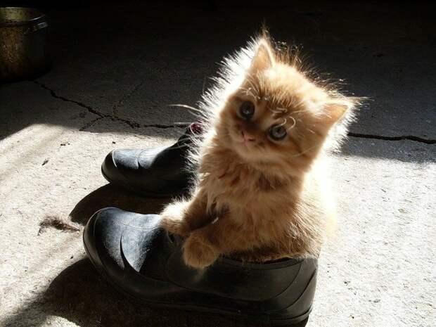 Купи кота кот, прикол, юмор