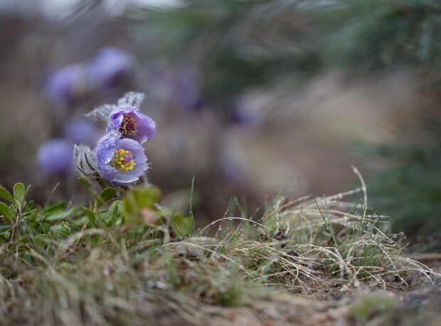 Про весну