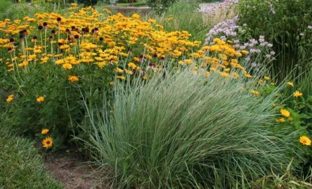 «Дождевые» цветники — естественные фильтры и барьеры для воды