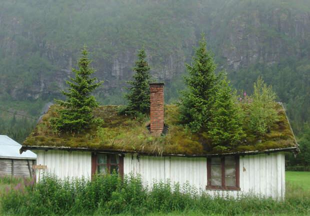 9 фото офигенных скандинавских домов с заросшей крышей, в которых хочется провести старость