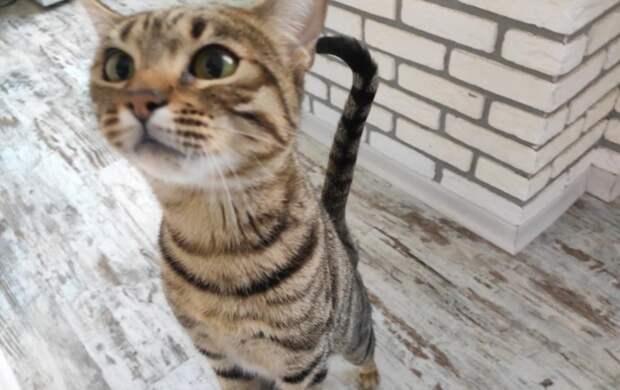 Вакцину от аллергии на кошек начали испытывать: когда она станет доступна населению