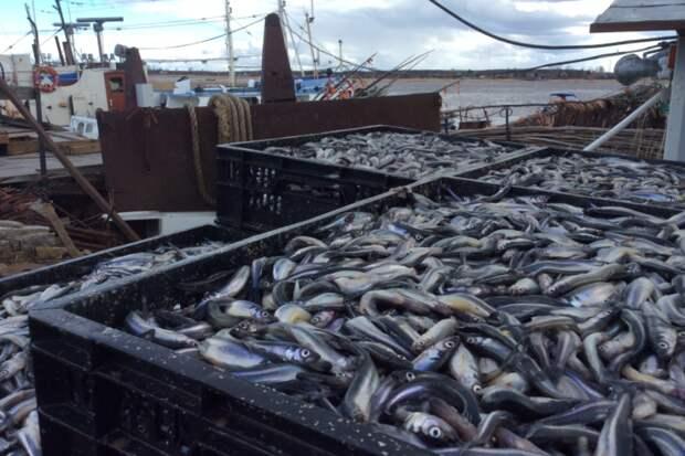Россия собирает заявки на вылов рыбы у берегов Марокко