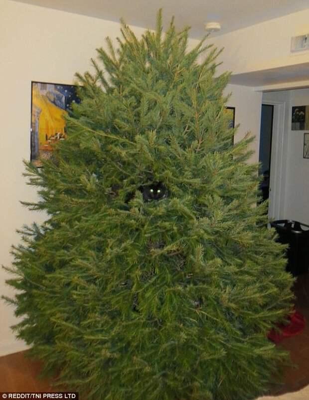 Найди котейку животные, кот, коты, кошки, новый год, приколы с животными, фото, юмор