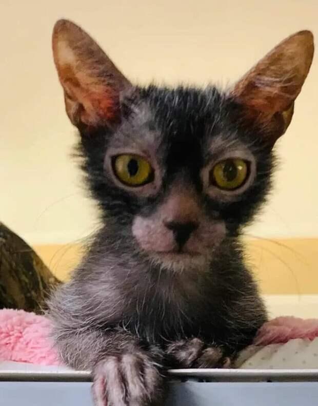 Котёнок ликой жил на улице до тех пор, пока не нашёлся человек, который рискнул до него дотронуться