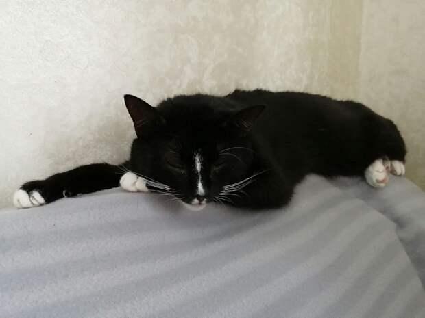 Тяжелобольная нижегородка ищет дом 14 кошкам и 3 собакам