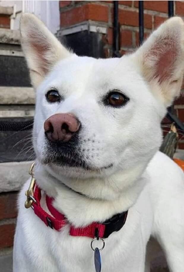 Собака с ошейником