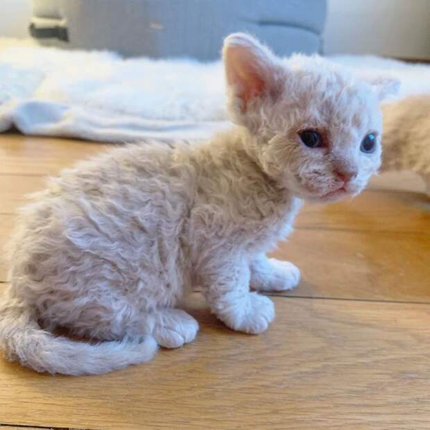 Эти красивые котята точно не оставят вас безразличными