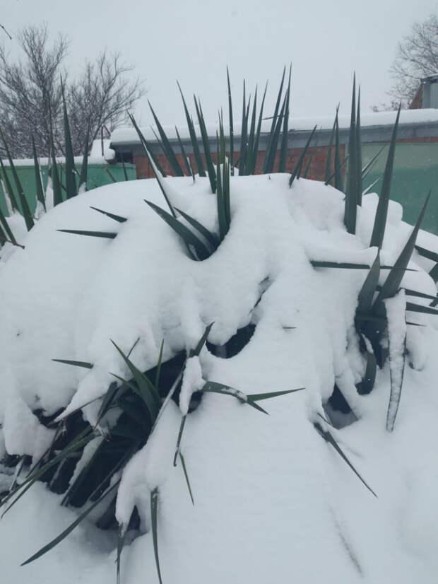 Снегопад на Кубани продлится до четверга