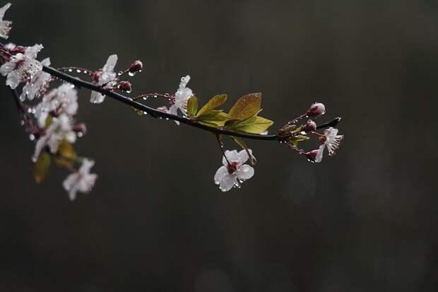 В Удмуртии во вторник ожидаются кратковременные дожди