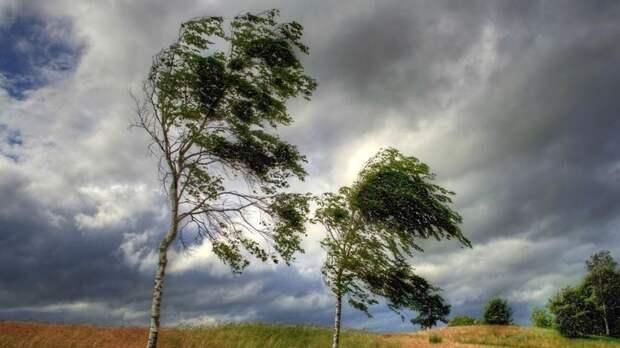 Синоптики предупредили о ветре до 22 м/с в Омской области
