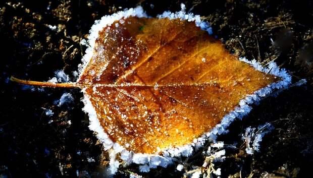 Дневные заморозки ожидаются в Московском регионе в середине следующей недели