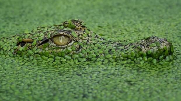 Чудеса маскировки: а вы сможете найти животных, которые спрятались на фотографиях?