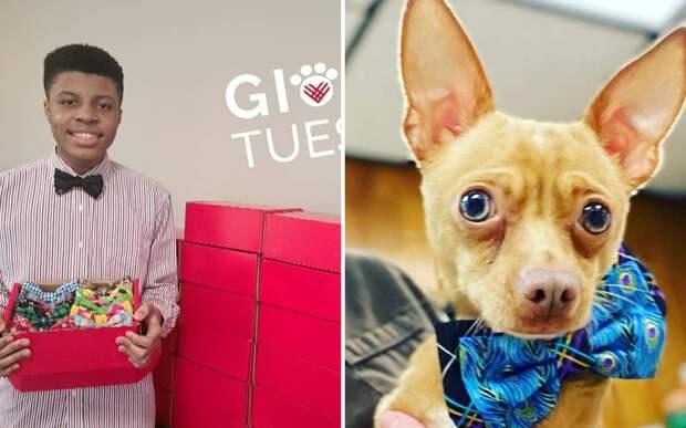 Парень начал шить галстуки для собак из приюта, чтобы они смогли найти дом