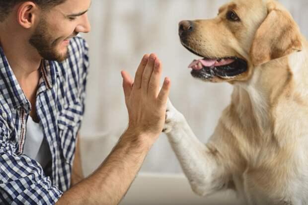 Люди, которые говорят со своими животными, умнее остальных! Вот почему