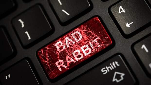 Мошенники придумали новую схему кражи денег с банковских карт, получившую название «Белый кролик»