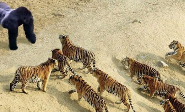5 самых бесстрашных животных: готовы идти даже против льва