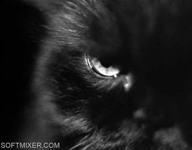 Если чёрный кот разбил зеркало пустым ведром…