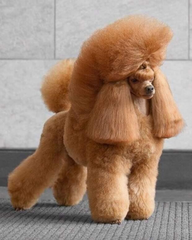 Узоры на теле собаки или стрижка собаки с причудами