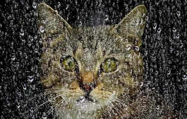 Бирюк и кошки