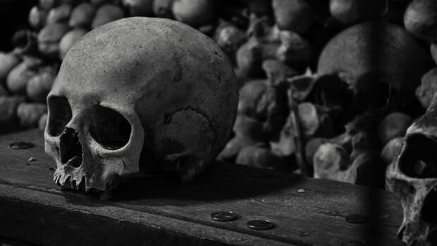 Выживание во время зомби-апокалипсиса, история лесбиянок, охота на призраков и другие учебные программы на Западе