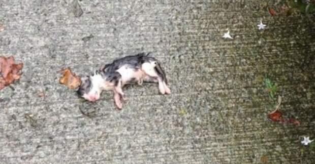 Новорожденный котенок лежал в луже под дождем...