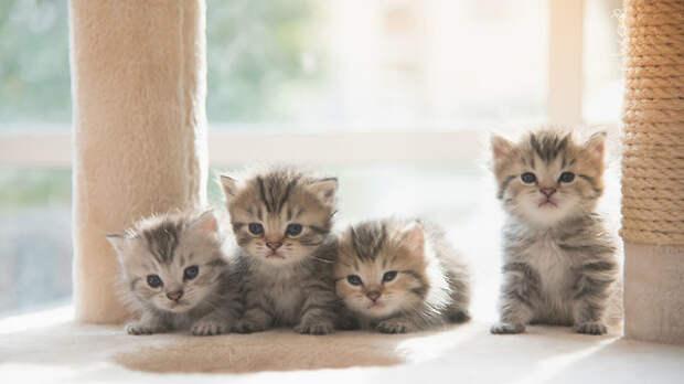 Пушистые и очень опасные: к чему снятся котята
