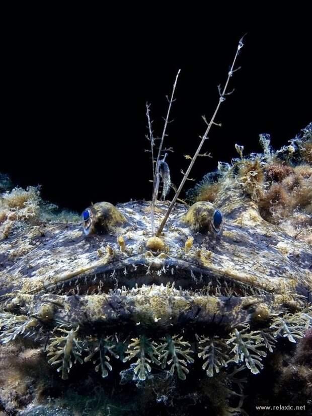 underwater_021