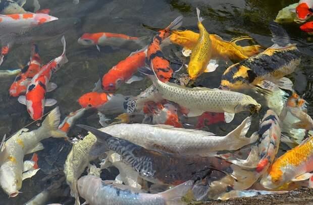 Виды популярной рыбы, которую уже нельзя есть