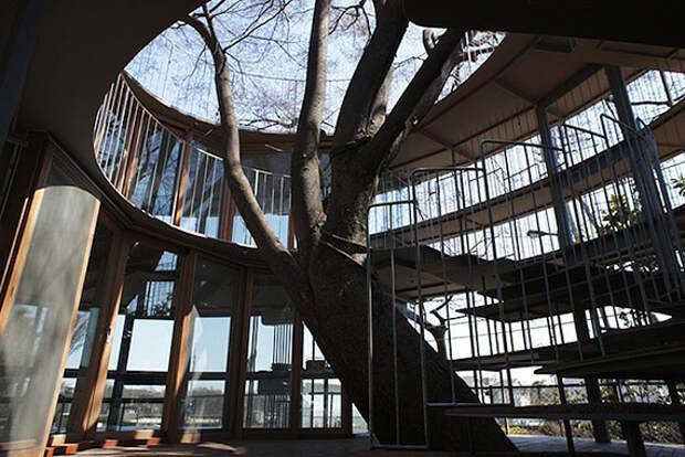 Tezuka Architects: детский сад по-японски