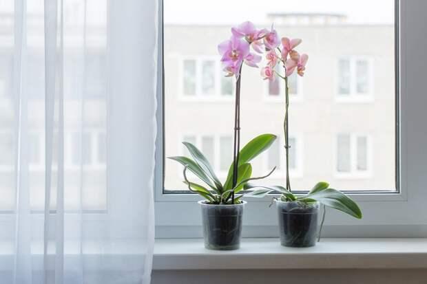 уход и цветение орхидеи