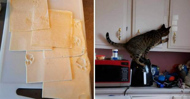 14 котов-проказников, в одном доме с которыми не заскучаешь