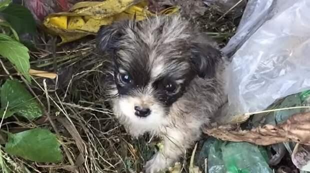 «Заберите меня домой!»: в куче грязи и мусора копошился крохотный дрожащий щенок, которого кто-то выбросил