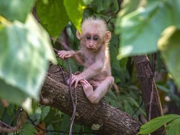 Биологи впервые создали химерные эмбрионы человека и обезьяны