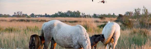 Стадо из 21 лошади украл скотокрад в Карагандинской области