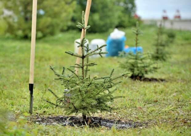 На территории ижевского аэропорта будет расти частичка «Леса Победы»