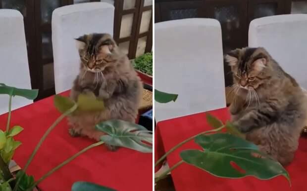 «Да ну тебя»: кот устроил драку с растением, но быстро заскучал
