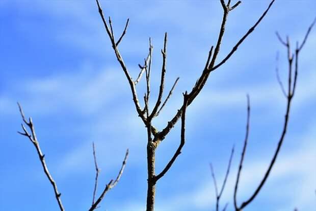 Сухие Ветки, Голубое Небо, Экология
