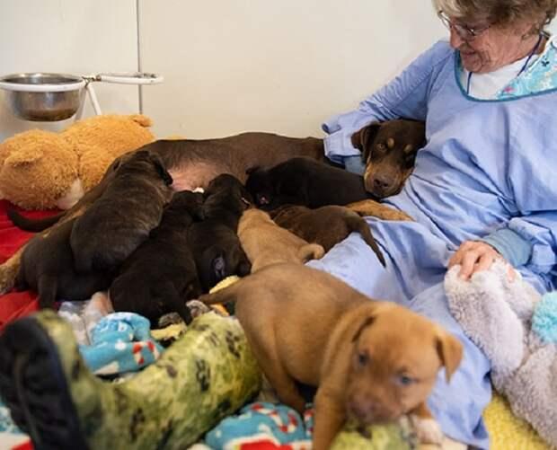 После того, как ее щенки выросли, собака заскучала. А в это время в приюте появилась истощенная четвероногая мама