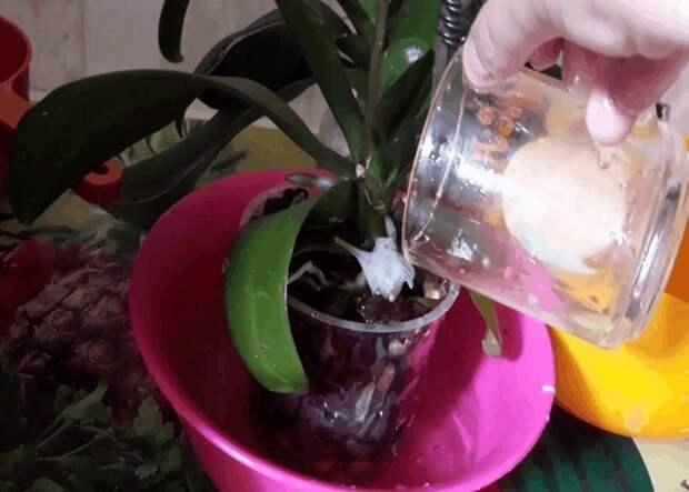 Доступная подкормка, гарантирующая Орхидее великолепное цветение