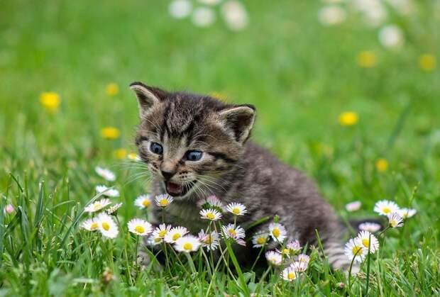 Эксперт рассказала о смертельных для домашних кошек ошибках хозяев