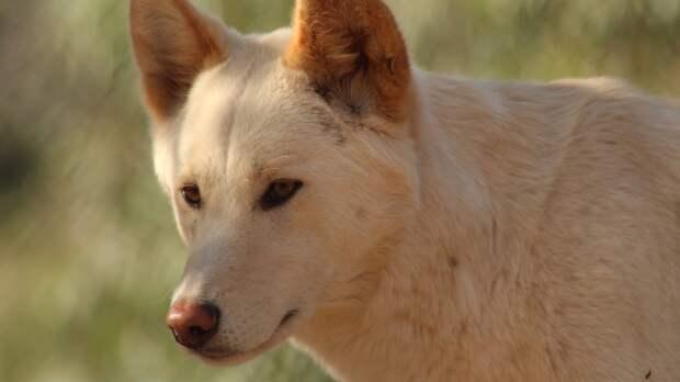 Приютский пес предотвратил гибель людей при пожаре в Кировской области