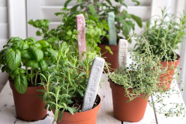 Глиняные таблички для огорода